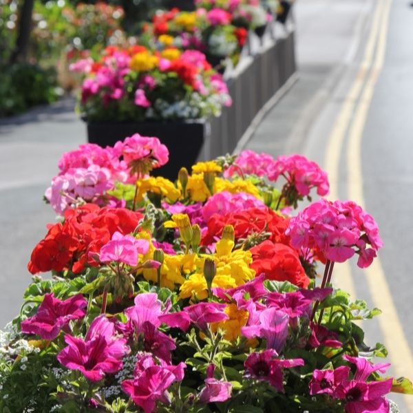 Flowers in plant pots of Main Street in Garforth
